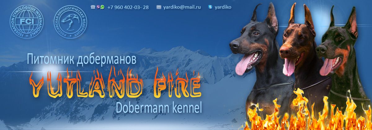 Питомник доберманов Ютланд Файр / Dobermann kennel Yutland Fire